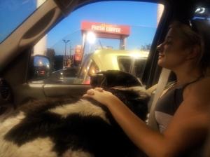 Large Lap Dog