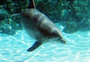 Dolphin at the Zoo