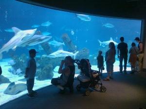 ABQ BioPark Aquarium