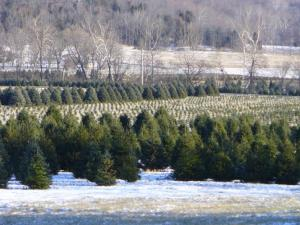 John Neiman's Christmas Tree Farm