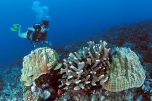 Diving in Tahiti
