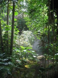 Rainforest Honeymoon
