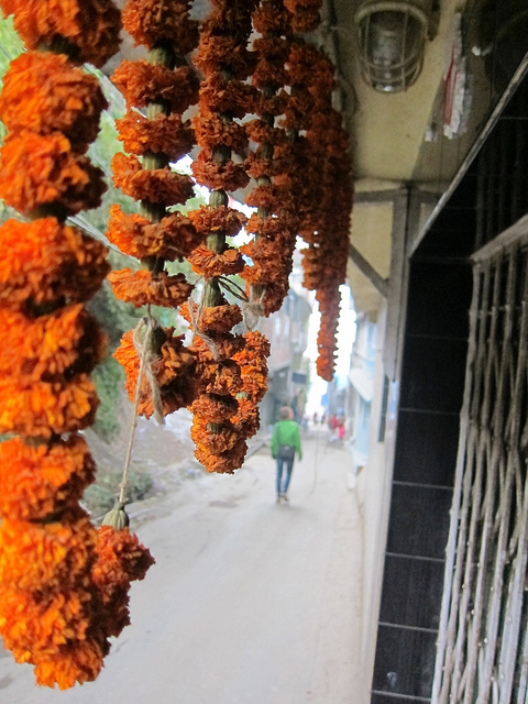 Darjeeling Marigolds