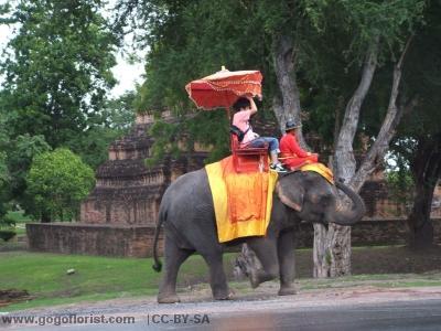 Thai Elephant Rides