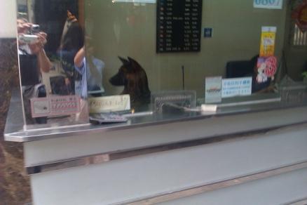 Money Exchange Dog in Hong Kong