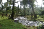 Honeymoon in India - Coorg