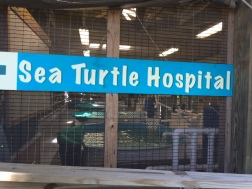 Jekyll Island - Sea Turtle Hospital Sign